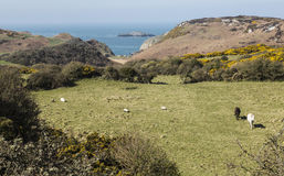 Η παλαιά πορσελάνη λειτουργεί στο υπόβαθρο στη βόρεια ακτή Anglesey, Ουαλία, UK Στοκ Εικόνες