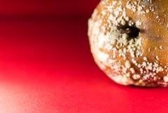 Η παλαιά σαπίζοντας Apple με την φρούτο-αποσύνθεση στο κόκκινο υπόβαθρο Στοκ φωτογραφία με δικαίωμα ελεύθερης χρήσης