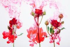 Η περίληψη ύφους υδατοχρώματος κόκκινη αυξήθηκε άσπρα ρόδινα φύλλα αίματος πάθους νερού εσωτερικών υποβάθρου ακρυλικά πράσινα γύρ στοκ φωτογραφίες με δικαίωμα ελεύθερης χρήσης