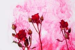 Η περίληψη ύφους υδατοχρώματος κόκκινη αυξήθηκε άσπρα ρόδινα φύλλα αίματος πάθους νερού εσωτερικών υποβάθρου ακρυλικά πράσινα γύρ στοκ εικόνες