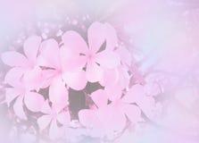 Η περίληψη θόλωσε όμορφο Plumeria στο μαλακό υπόβαθρο λουλουδιών χρώματος Στοκ φωτογραφία με δικαίωμα ελεύθερης χρήσης