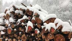 Η περικοπή, νεκρός, κορμοί δέντρων βρίσκεται κάτω από τις βαριές χιονοπτώσεις απόθεμα βίντεο