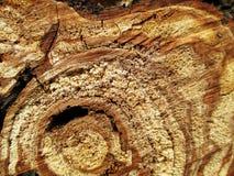 Η περικοπή το κολόβωμα δέντρων Στοκ Φωτογραφία