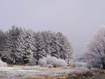 η περιοχή κοντά να κάνει σκι Ελβετία πανοράματος στο χειμώνα στοκ εικόνες με δικαίωμα ελεύθερης χρήσης