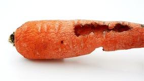 Η περιστροφή του σάπιου καρότου από το έντομο φιλμ μικρού μήκους