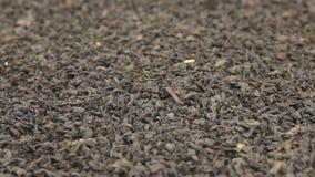 Η περιστροφή του υποβάθρου ολόκληρου ξηρού βγάζει φύλλα του μαύρου τσαγιού Κινηματογράφηση σε πρώτο πλάνο απόθεμα βίντεο