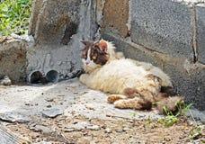 Η περσική γάτα ξαπλώνει στο υπόβαθρο φύσης Στοκ φωτογραφία με δικαίωμα ελεύθερης χρήσης