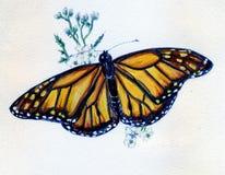 η πεταλούδα ανθίζει το λ& Στοκ φωτογραφία με δικαίωμα ελεύθερης χρήσης