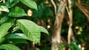 Η πεταλούδα βγάζει φύλλα επάνω φιλμ μικρού μήκους