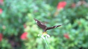 Η πεταλούδα κατουρεί