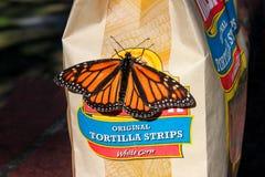 Η πεταλούδα μοναρχών που διαδίδει τα φτερά της σε μια τσάντα Tortilla πελεκά το Μπρίσμπαν Αυστραλία στις 13 Ιουνίου 2014 Στοκ Εικόνες