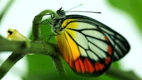 Η πεταλούδα σε πράσινο βγάζει φύλλα Στοκ Εικόνες