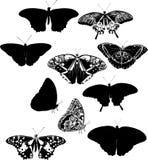 η πεταλούδα σκιαγραφεί &del Στοκ εικόνες με δικαίωμα ελεύθερης χρήσης