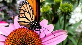 η πεταλούδα ανασκόπησης χρωματίζει απίστευτος τις αντιστοιχίες της που παρακαλούν τη στήριξη Στοκ Εικόνα