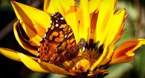 η πεταλούδα ανασκόπησης χρωματίζει απίστευτος τις αντιστοιχίες της που παρακαλούν τη στήριξη Στοκ Φωτογραφία