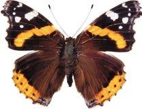 Η πεταλούδα ασβέστη, που απομονώνεται Στοκ Φωτογραφίες