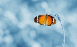 Η πεταλούδα είναι ένα όμορφο και υπόβαθρο θαμπάδων Στοκ φωτογραφίες με δικαίωμα ελεύθερης χρήσης