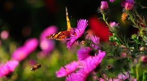 Η πεταλούδα στα λουλούδια στοκ φωτογραφία