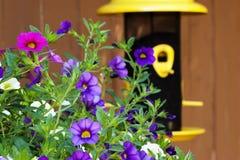 Η πετούνια κήπων ανθίζει τον τροφοδότη πουλιών Στοκ Εικόνες
