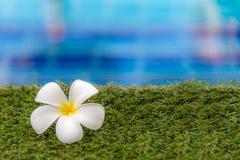 Η πισίνα Plumeria flowers spa πλησίον, χαλαρώνει και υγιής προσοχή Στοκ Εικόνες
