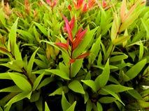 Η ποικιλία του χρώματος φύλλων φυτών Στοκ Εικόνες