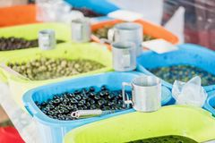 Η ποικιλία των πράσινων και μαύρων καρυκευμένων ελιών για πωλεί Στοκ φωτογραφία με δικαίωμα ελεύθερης χρήσης