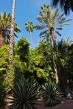 Η ποικιλία των φοινικών και άλλα δέντρα ενάντια στο μπλε ουρανό σε Majorelle καλλιεργούν στο Μαρακές, Μαρόκο Στοκ Εικόνες