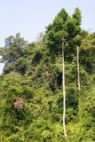 Η πολύβλαστη βλάστηση της ζούγκλας της Ταϊλάνδης στοκ φωτογραφίες με δικαίωμα ελεύθερης χρήσης