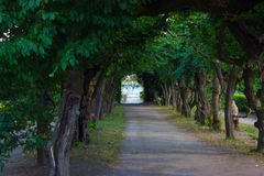 Η πορεία ευθυγράμμισε με τα υψηλά δέντρα και τα υδάτινα έργα Στοκ Εικόνες