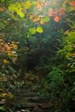 Η πορεία και τα κόκκινα φύλλα Στοκ Φωτογραφίες