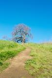 Η πορεία μέχρι το δρύινο δέντρο Στοκ Εικόνες