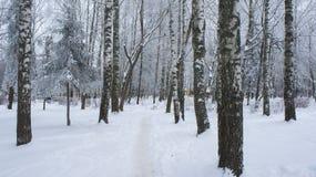 Η πορεία μεταξύ snowdrifts στο πάρκο σημύδων Στοκ εικόνες με δικαίωμα ελεύθερης χρήσης