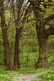 Η πορεία που φεύγει στο δάσος Στοκ φωτογραφία με δικαίωμα ελεύθερης χρήσης