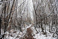 Η πορεία στην αρχή του χειμώνα Στοκ φωτογραφία με δικαίωμα ελεύθερης χρήσης