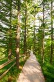 Η πορεία στο δάσος στοκ εικόνες με δικαίωμα ελεύθερης χρήσης