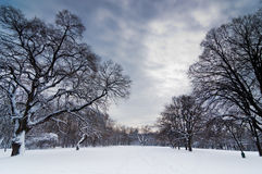 Η πορεία χιονιού μέσω του δασικού καθαρίσματος κάτω από το βαρύ χειμώνα καλύπτει, δάσος Kosutnjak, Βελιγράδι Στοκ Εικόνα