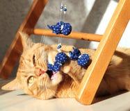 Η πορτοκαλιά γάτα ροκανίζει το σακούλι χαντρών Στοκ Φωτογραφίες