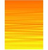Η πορτοκαλιά ρόδα Στοκ Εικόνα