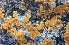 Η πορτοκαλιά σύσταση μυκήτων Στοκ φωτογραφία με δικαίωμα ελεύθερης χρήσης