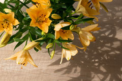 Η πορτοκαλιά Lilly στον ήλιο Στοκ φωτογραφίες με δικαίωμα ελεύθερης χρήσης