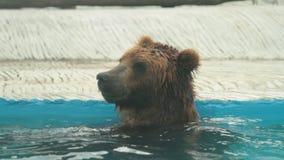 Η πολική αρκούδα κολυμπά στο εσωτερικό του ζωολογικού κήπου της Πράγας φιλμ μικρού μήκους