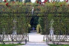 Η πράσινη αλέα με τα τριαντάφυλλα στο πάρκο στην ηλιόλουστη ημέρα Στοκ φωτογραφία με δικαίωμα ελεύθερης χρήσης