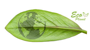 Πράσινη γήινη έννοια Στοκ Φωτογραφίες