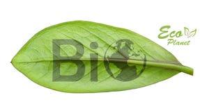 Πράσινη γήινη έννοια Στοκ Εικόνα