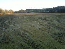 Η πράσινη λίμνη από τα πράσινα άλγη Στοκ εικόνες με δικαίωμα ελεύθερης χρήσης