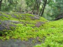 Η πράσινη χλόη εμφανίζεται στη ΣΚΛΗΡΉ ΡΟΚ STONE στοκ φωτογραφίες
