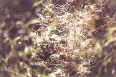 Η πράσινη χλόη και η ξηρά χλόη, ξηρά φυτά, ξεραίνουν τα φύλλα Στοκ Εικόνα