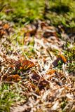 Η πράσινη χλόη και η ξηρά χλόη, ξηρά φυτά, ξεραίνουν τα φύλλα Στοκ Φωτογραφίες