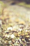 Η πράσινη χλόη και η ξηρά χλόη, ξηρά φυτά, ξεραίνουν τα φύλλα Στοκ Εικόνες