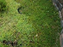 Η πράσινη χλόη και το πράσινο έδαφος καλύπτουν να αναλάβουν κοντά σε έναν τοίχο φραγμών τσιμέντου Στοκ φωτογραφία με δικαίωμα ελεύθερης χρήσης